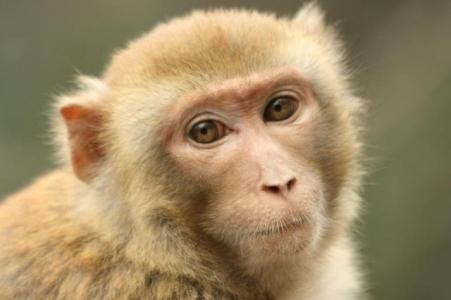 描写猴子外貌的句子