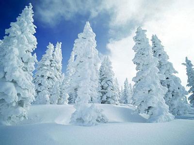 美丽的雪作文600字_1
