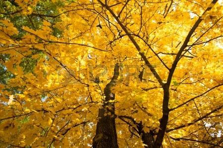 美丽的秋天作文300字左右