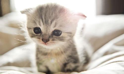 小猫作文400字