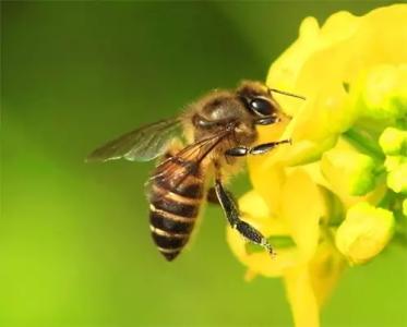 蜜蜂的启示作文600字