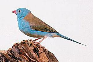 我想对小鸟说作文600字