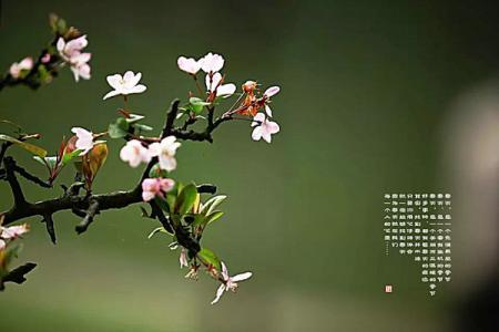 春之季作文600字