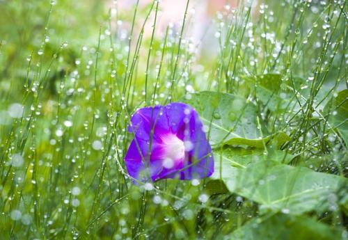 雨后的景观作文400字