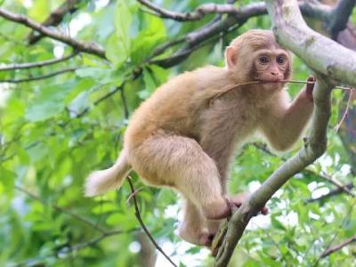 可爱的猴子作文600字