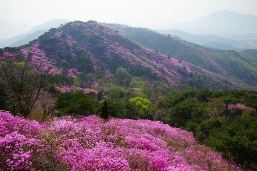 美丽的紫金山作文400字_1