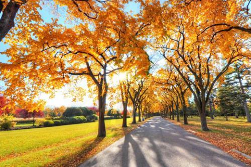 五年级作文《秋天的树叶》
